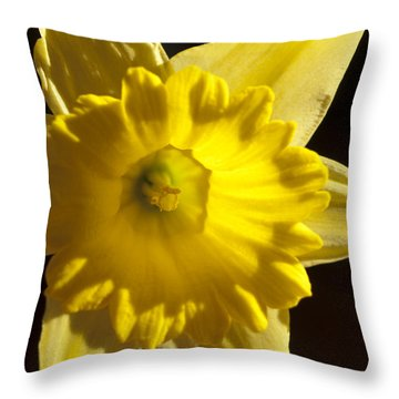 Throw Pillow featuring the photograph Daffodile by Haleh Mahbod