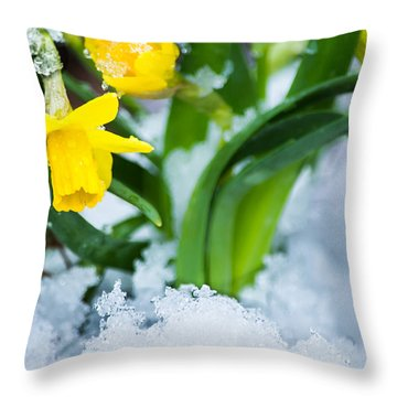 Daffodils In The Snow  Throw Pillow