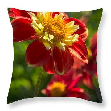 Dahlia 5 Throw Pillow