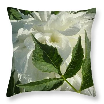 Throw Pillow featuring the photograph Dahlia Delicate Dancer by Susan Garren