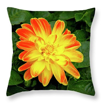 Dahlia Throw Pillow by Ed  Riche