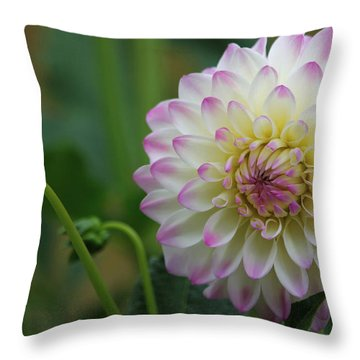 Dahlia In The Mist Throw Pillow