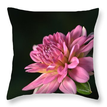 Dahlia In The Spotlight Throw Pillow by Joy Watson