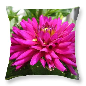 Dahlia Named Andreas Dahl Throw Pillow by J McCombie