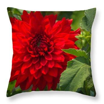 Dahlia Perfection Throw Pillow by Jane Luxton