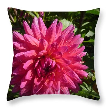 Throw Pillow featuring the photograph Dahlia Pink by Susan Garren