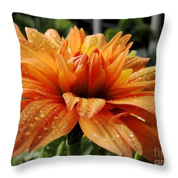 Dahlia Raindrops Throw Pillow