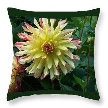 Dahlia Vo Vo Gal Throw Pillow by Catherine Gagne