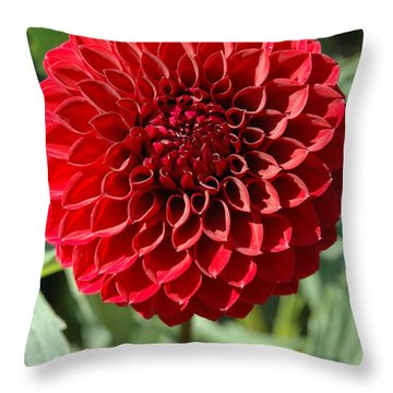 Dahlia Xii Throw Pillow