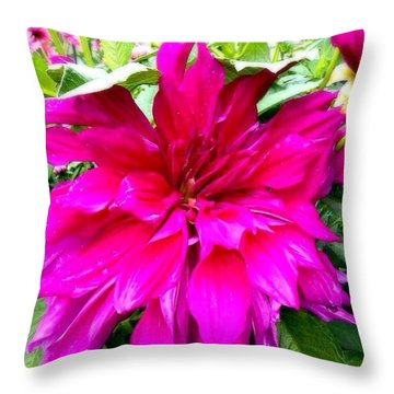 Dahlias Of Boulder IIi Throw Pillow