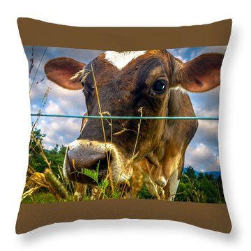 Dairy Cow Throw Pillow by Bob Orsillo