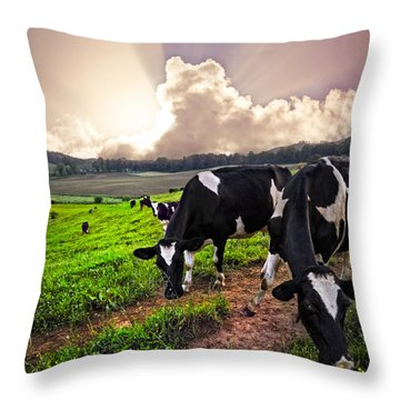 Dairy Cows At Sunset Throw Pillow by Debra and Dave Vanderlaan
