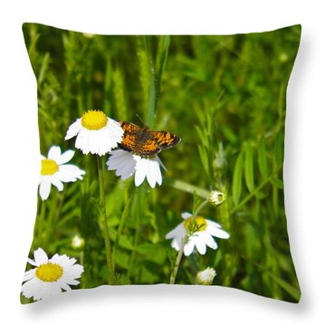 Daisey And Butterfly Throw Pillow by Nick Kirby