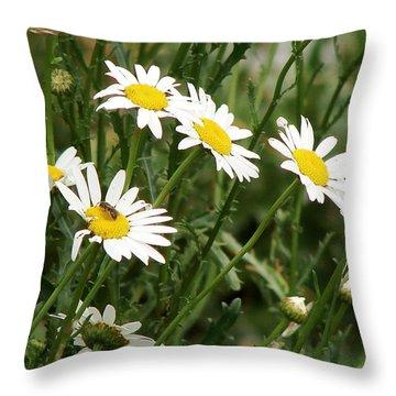 Daisies 1 Throw Pillow