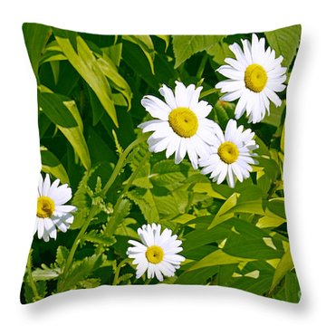 Daisies In Provincetown Throw Pillow
