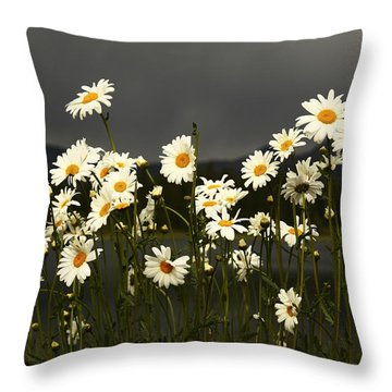 Daisies In Storm Light Throw Pillow