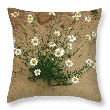 Daisies In The Sand Throw Pillow by Randy Pollard