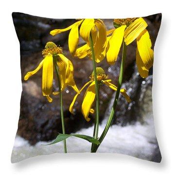 Daisies Near The Water  Throw Pillow