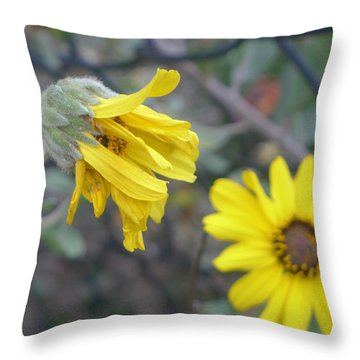 Daisies Throw Pillow by Nora Boghossian