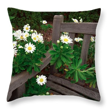 Daisies On The Bench Throw Pillow