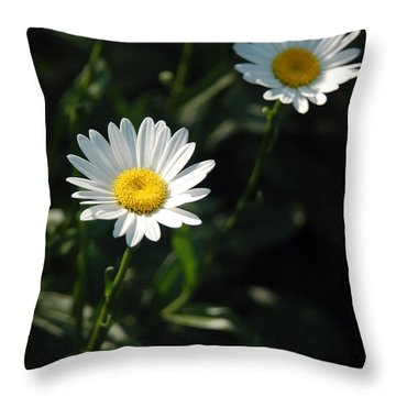 Daisy Days Throw Pillow by Suzanne Gaff