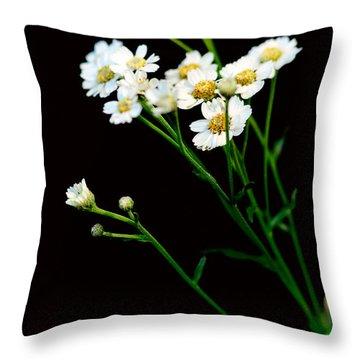 Daisy Flower Bouquet  Throw Pillow