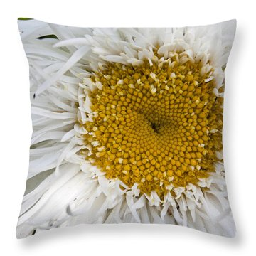 Daisy Flower  Throw Pillow