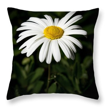 Daisy In The Garden Throw Pillow