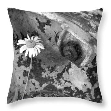 Throw Pillow featuring the photograph Daisy by John Schneider