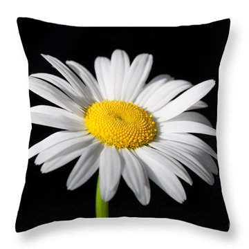 Daisy On Black 1 Throw Pillow