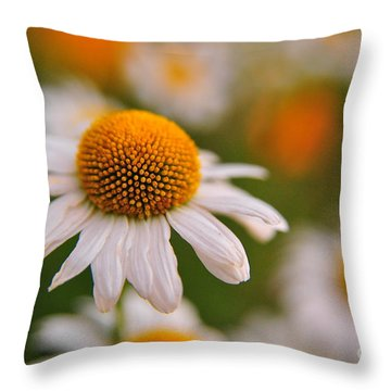 Daisy Power Throw Pillow by Terri Gostola