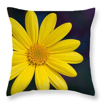 Daisy Throw Pillow by Randy Wood