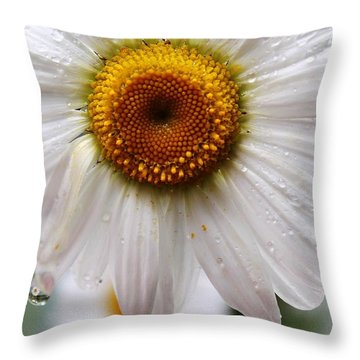 Daisy Reflect Throw Pillow