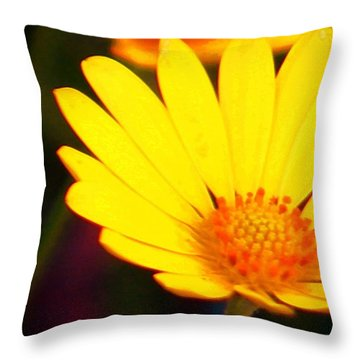Daisy Throw Pillow by Timothy Bulone