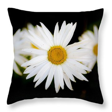 Daisy Trio Throw Pillow