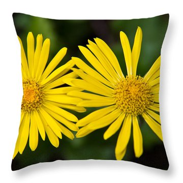 Throw Pillow featuring the photograph Daisy Twins by Aaron Berg