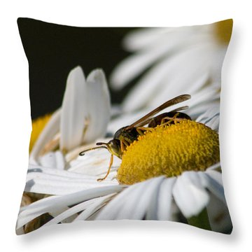 Throw Pillow featuring the photograph Daisy With Friend by Greg Graham