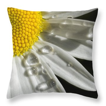 Daisy With Raindrops Throw Pillow