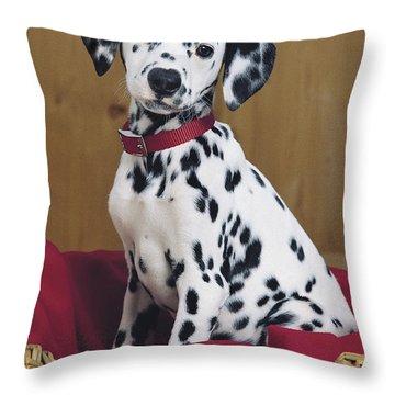 Dalmatian In Basket A108 Throw Pillow by Greg Cuddiford
