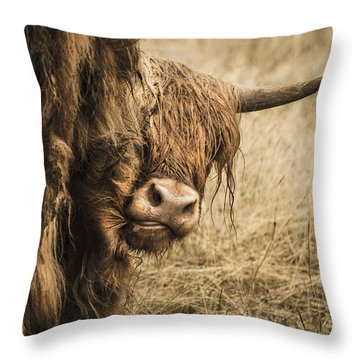Highland Cow Damn Fleas Throw Pillow