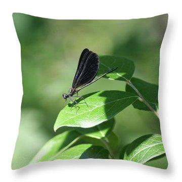 Throw Pillow featuring the photograph Damselfly  by Karen Silvestri