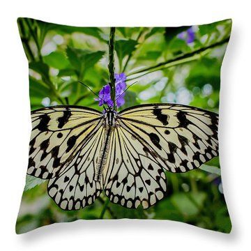 Dancing With Butterflies Throw Pillow by Jon Burch Photography