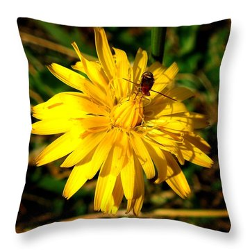 Throw Pillow featuring the photograph Dandelion And Bug by Pete Trenholm