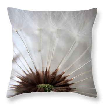 Dandelion Cross Section Throw Pillow by Kenny Glotfelty