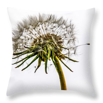 Dandelion Throw Pillow by Hannes Cmarits