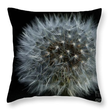 Dandelion Seed Head On Black Throw Pillow by Sharon Talson