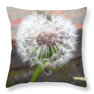 Dandelion Tada Throw Pillow by Barbara McDevitt
