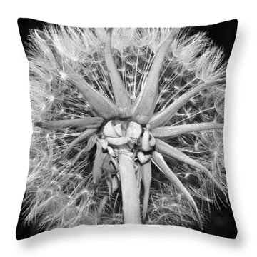 Dandy  Lion...looking Up Throw Pillow by Tammy Schneider
