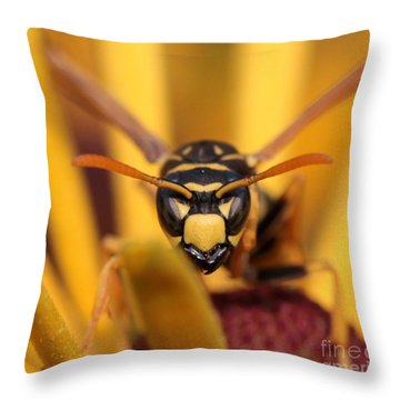 Danger Stare Throw Pillow by Kenny Glotfelty