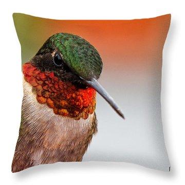 Da162 Hummingbird Thinking By Daniel Adams Throw Pillow